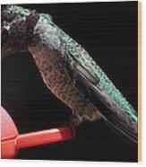 Hummingbird Anna's Eating On Perch Wood Print
