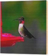 Hummingbird Art 227 Wood Print