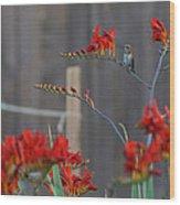 Hummingbird At Rest Wood Print