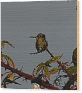 Hummingbird Atop Blackberry Bushes Wood Print