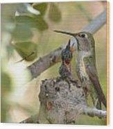 Hummingbird Babies Wood Print by Old Pueblo Photography