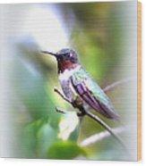 Hummingbird - Beautiful Wood Print