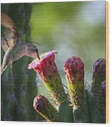 Hummingbird Breakfast Southwest Style  Wood Print