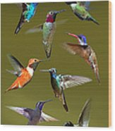 Hummingbird Collage Wood Print