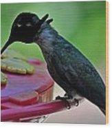 Hummingbird Costa's At The Feeder Wood Print