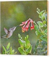Hummingbird Dives In  Wood Print