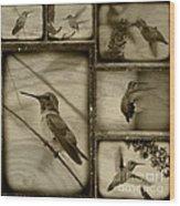 Hummingbird Family Portraits Wood Print