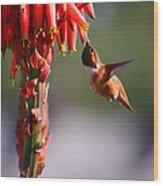 Hummingbird Feast  Wood Print