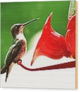 Hummingbird Feeder Wood Print