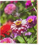 Hummingbird Flight Wood Print by Garry Gay