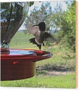 Hummingbird Flying To The Feeder Wood Print