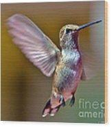 Hummingbird Frolic Wood Print