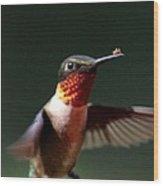 Hummingbird - Hitching A Ride - Ruby-throated Hummingbird Wood Print