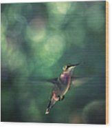 Hummingbird Hovering Wood Print by William Schmid