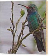 Hummingbird II Wood Print