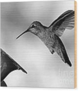 Hummingbird In Black And White Wood Print