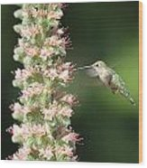 Hummingbird In Burbank Garden Wood Print