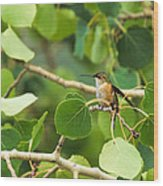 Hummingbird In Tree Wood Print