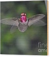 Hummingbird Male Anna's Flapping His Wings Wood Print