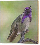 Hummingbird Male Costa Wood Print