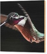 Hummingbird Male Costa's Decending  Wood Print