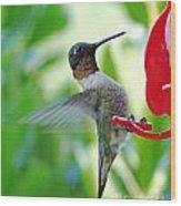 Hummingbird Male Ruby Throated  Wood Print