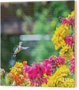 Hummingbird Moment Wood Print