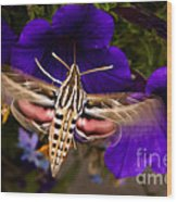 Hummingbird Moth   #8612 Wood Print