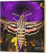 Hummingbird Moth   #8645 Wood Print