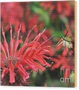 Hummingbird Moth Feeding On Red Flower Wood Print