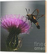 Hummingbird Moth II Wood Print