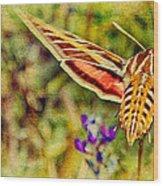 Hummingbird Moth In Wildflowers Wood Print