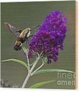 Hummingbird Moth Iv Wood Print