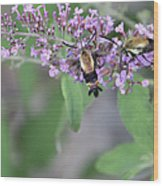 Hummingbird Moths Wood Print