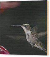 Hummingbird Wood Print by Nelson Watkins