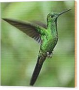Hummingbird No 1 Wood Print