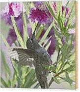 Hummingbird On A Desert Willow Wood Print