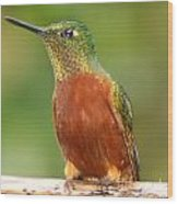 Hummingbird On A Limb Wood Print