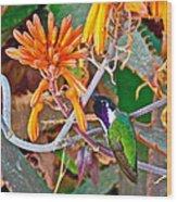 Hummingbird On Aloe In Living Desert In Palm Desert-california Wood Print