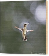 Hummingbird Pauses Erect Misty Light Wood Print