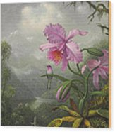 Hummingbird Perched On The Orchid Plant Wood Print