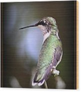Hummingbird Photo - Side View Wood Print