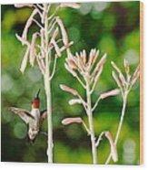 Hummingbird Pink Green - Floating Hummingbird Flashes Red Wood Print
