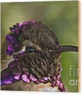 Hummingbird Portrait Wood Print