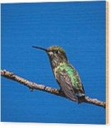 Hummingbird Posing Wood Print