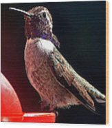 Hummingbird Posing On Perch Wood Print