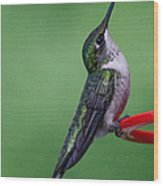 Hummingbird Profile Wood Print