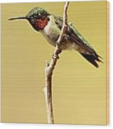 Hummingbird Resting Wood Print