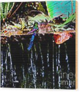 Hummingbird Shower Wood Print