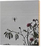 Hummingbird Silhouette I Wood Print